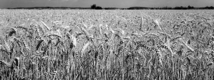 Agriculture Grain Farm