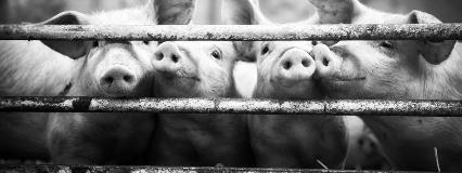 Pork Farm_1600x600